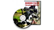 Border Collie Sheepdogs Off Duty!