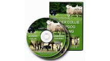 First Steps in Border Collie Sheepdog Training by Andy Nickless
