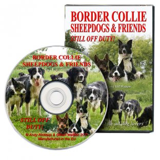 Border Collie Sheepdogs & Friends - Still off Duty