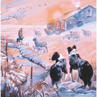 Christmas Collies Christmas Cards