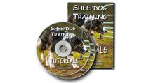 Sheepdog Training and General Interest